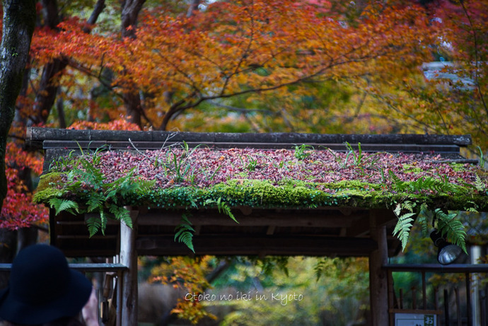 1124京都11月-27