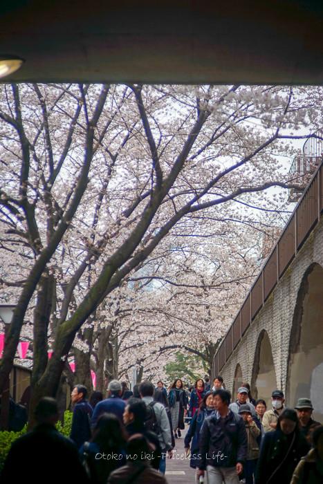 桜2019-7