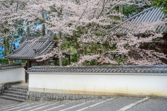 0407京都4月-59