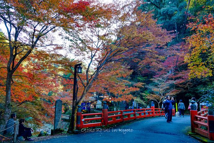 そうだ京都いこう20192019-70