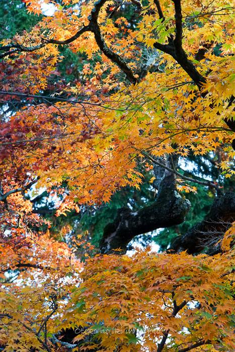 京都112511月-22