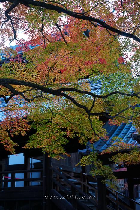 京都112511月-34