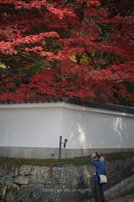 1108京都11月-9