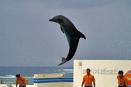 美ら海 イルカ2