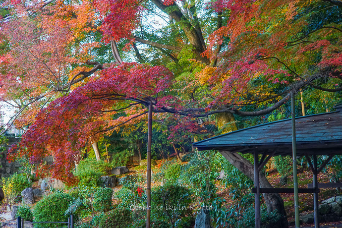京都112511月-8