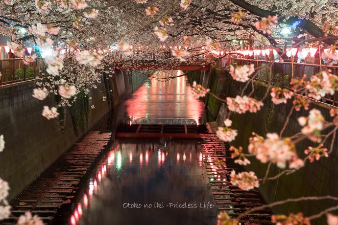 0330桜23月-58
