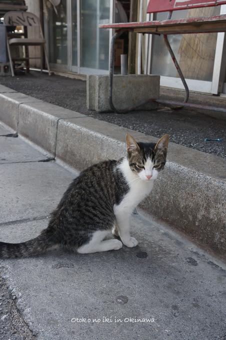 0511沖縄2月-3