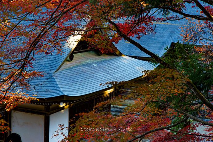 そうだ京都いこう20192019-80
