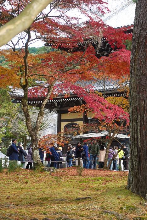京都1125_RX100朝11月-7