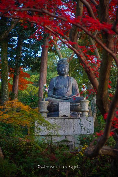 京都112511月-11