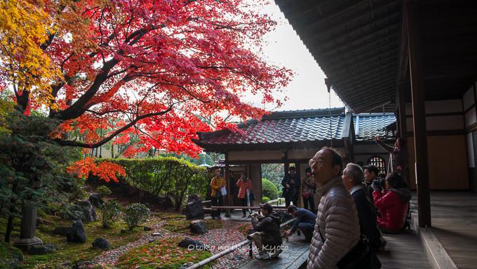 0602京都11月-8