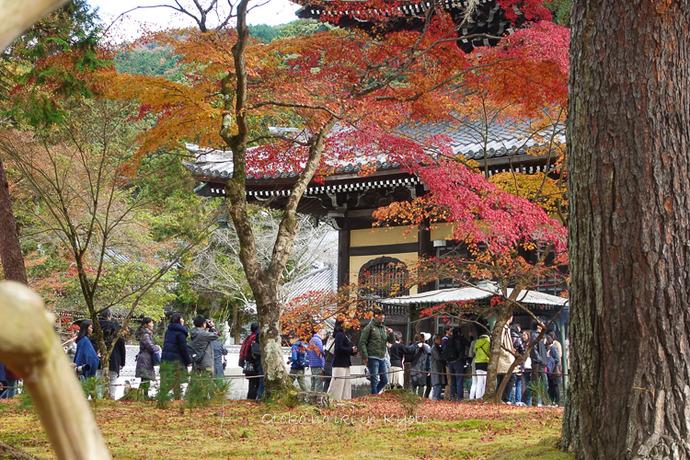 京都1125_RX100朝11月-6