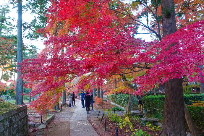 京都1125_RX100夕11月-4