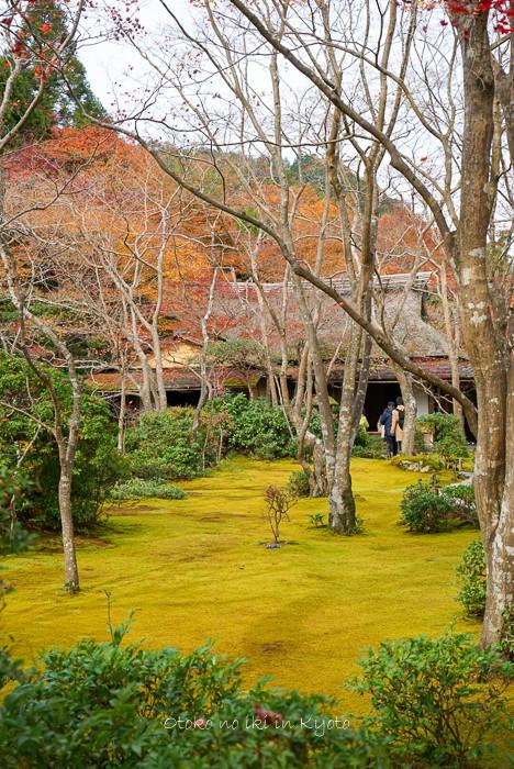1124京都11月-33
