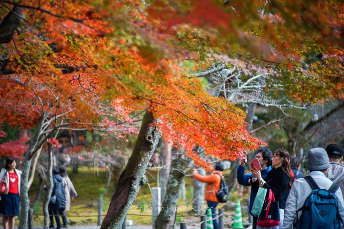 京都1125朝11月-9