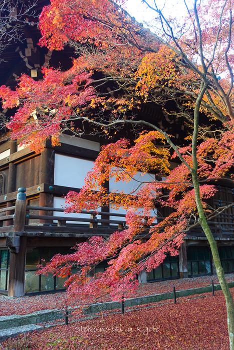 京都1125_RX100夕11月-1