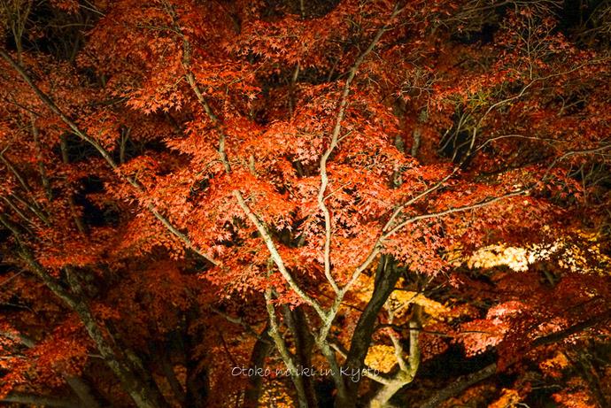 1123京都_2_11月-1