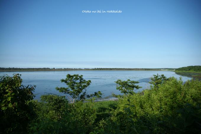 1130-4風蓮湖前木2