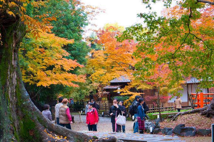 11月京都2012北野天満宮-17