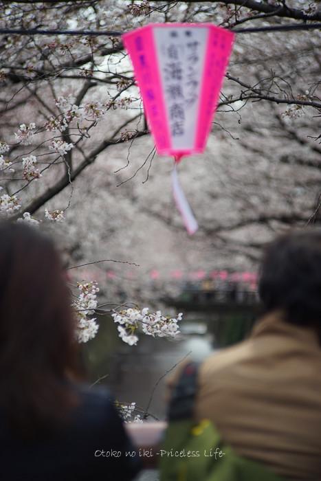 0330桜23月-9