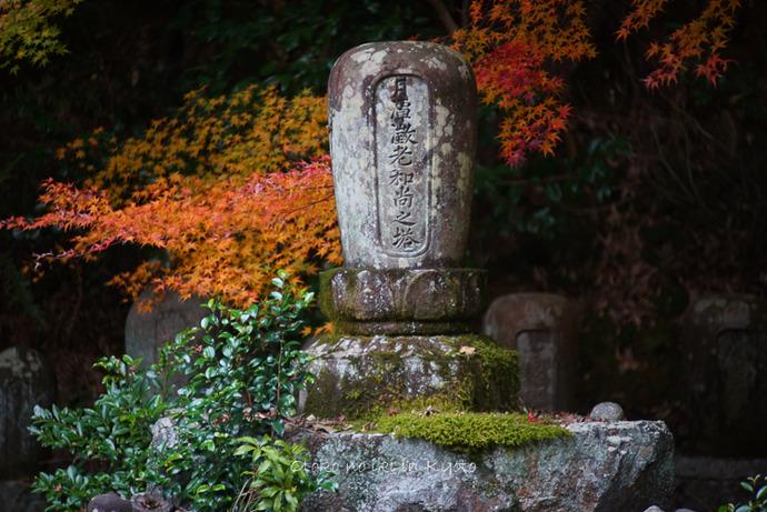 1124京都11月-40