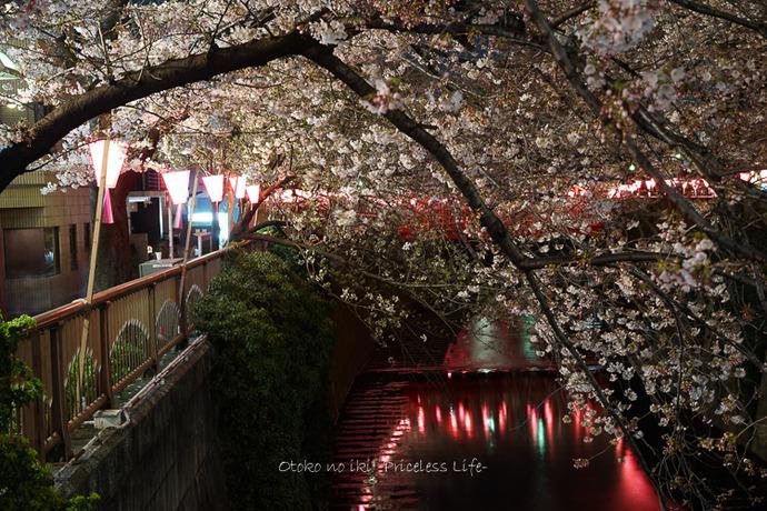 0330桜23月-71