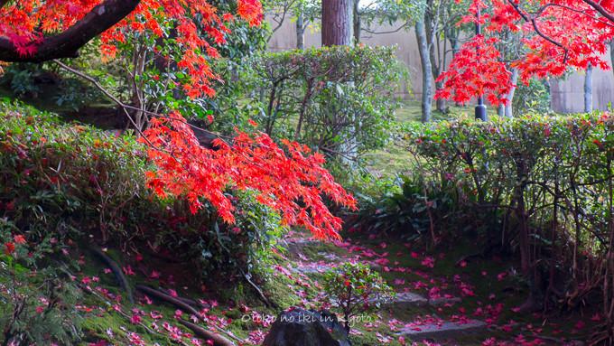 0602京都11月-5