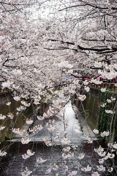 0330桜23月-3