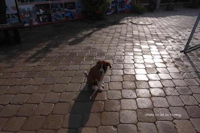 1108-1犬