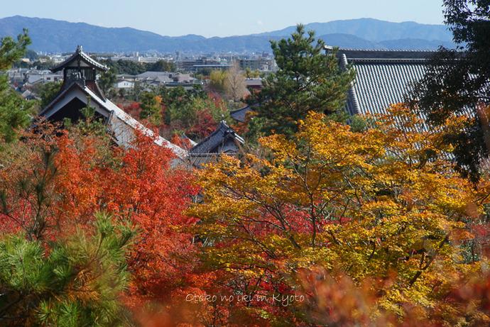 1124京都11月-5