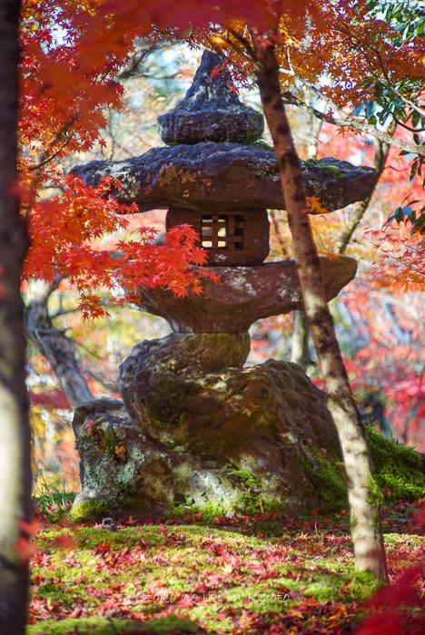 1124京都11月-20