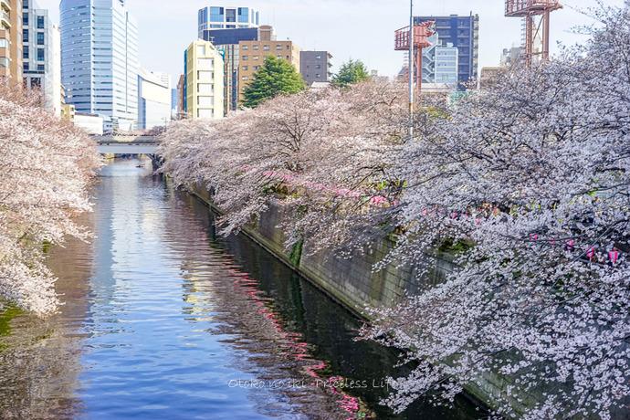 桜2019-21