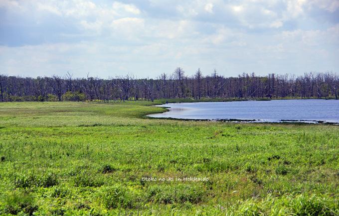 1120-4湿原2