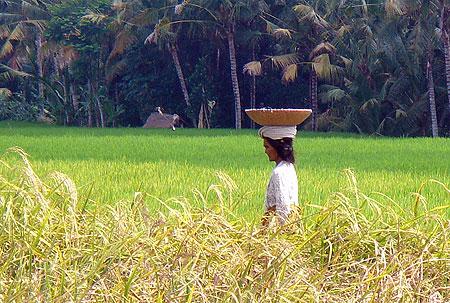 タナガジャ農婦