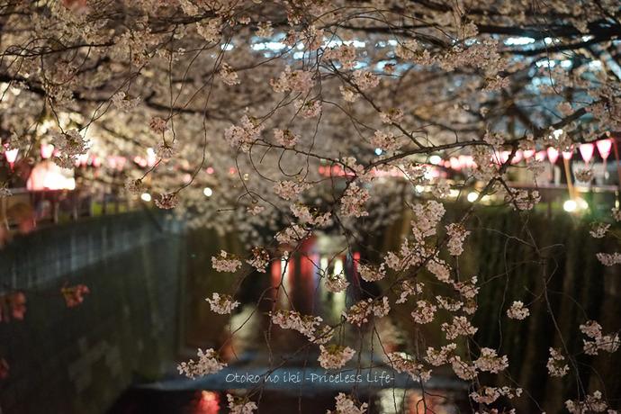 0330桜3月-1