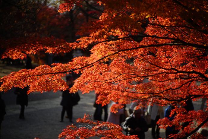 1123京都_2_11月-6