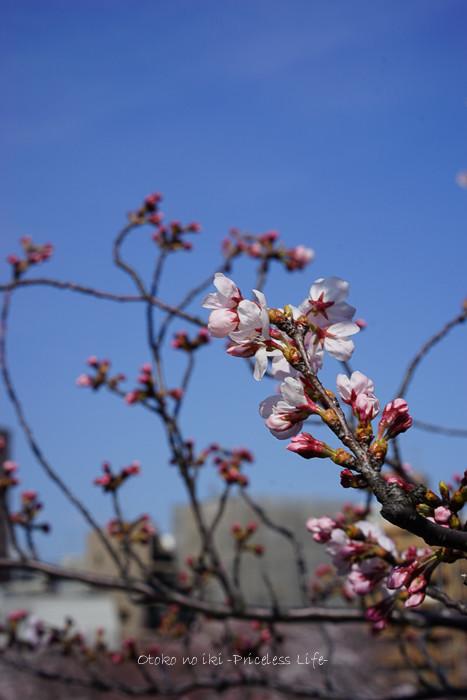 0330桜33月-2