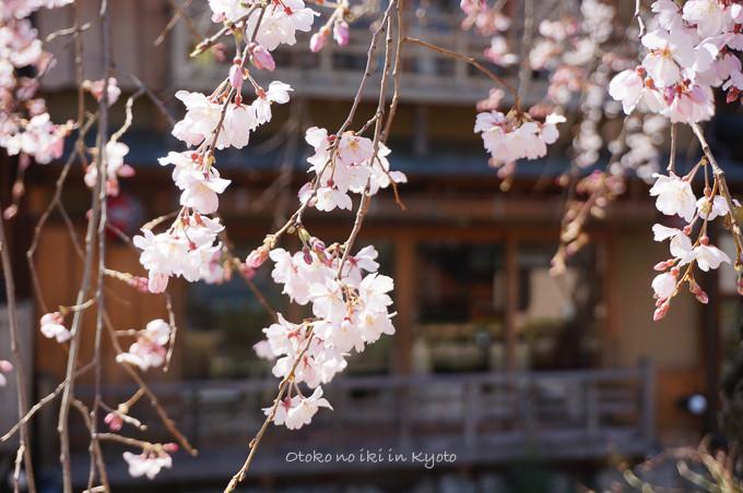 0324京都3月-3