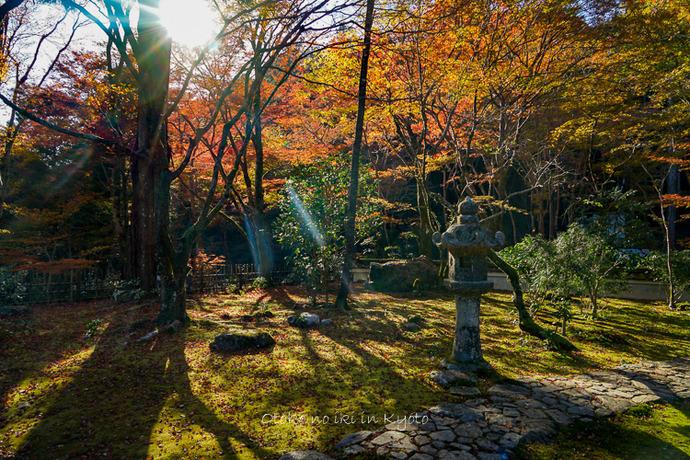 そうだ京都いこう20192019-60
