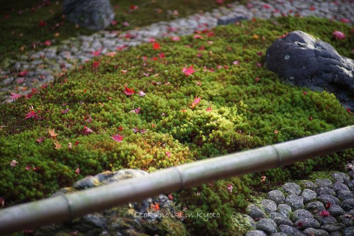 1108京都11月-51