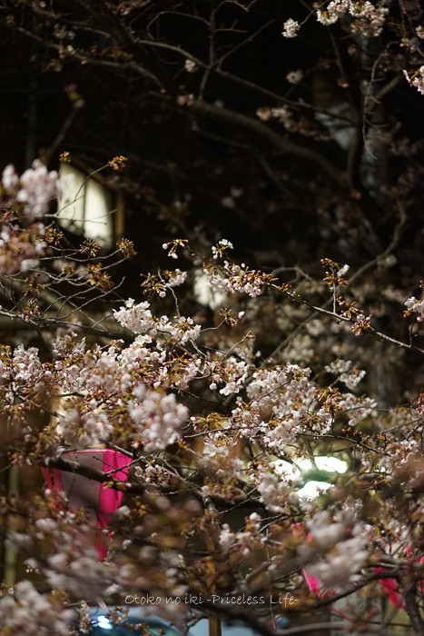 0404目黒川4月-19