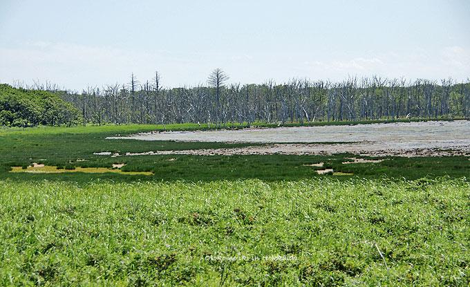 1120-3湿原