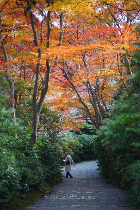 1124京都11月-36