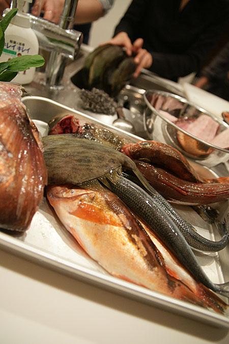 0402-3素材の魚