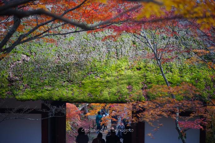1124京都11月-38