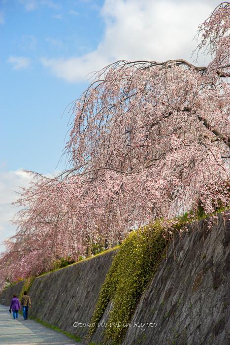 0329京都3月-16