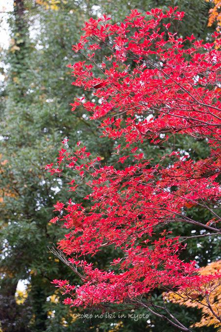 11月京都2012北野天満宮-7