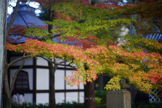 1123京都_2_11月-5