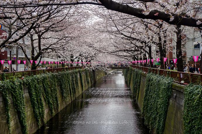 0330桜23月-10