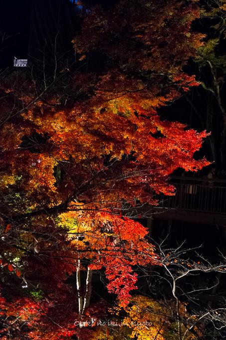 1123清水寺11月-6